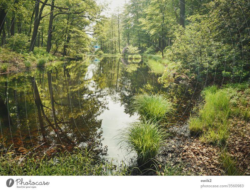 Waldsee Park Kromlau Landkreis Görlitz Ostdeutschland Niederschlesien Sachsen Außenaufnahme Farbfoto Menschenleer Landschaft Bäume Sträucher Gräser