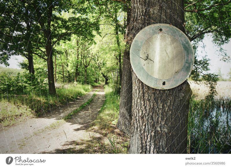Hier gilt die StVO Natur draußen Baum Schild Verkehrszeichen Waldweg Fahrverbot Außenaufnahme Farbfoto Menschenleer Tag Landschaft Umwelt Pflanze Sonnenlicht