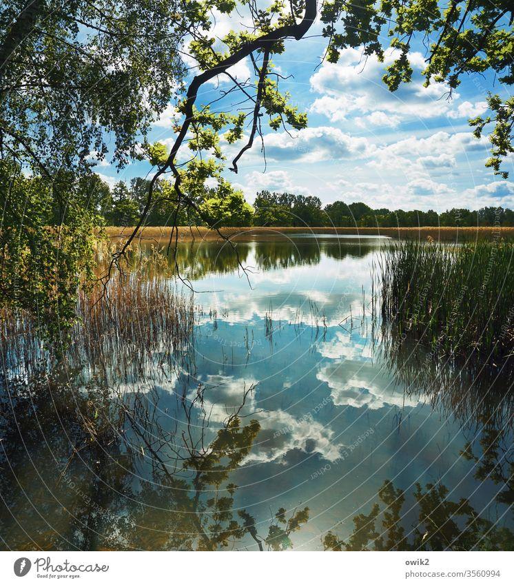 Sanftes Idyll See Wald Horizont Wasser Natur Baum Landschaft Himmel Außenaufnahme Reflexion & Spiegelung Farbfoto Pflanze grün Sträucher Schönes Wetter Bäume