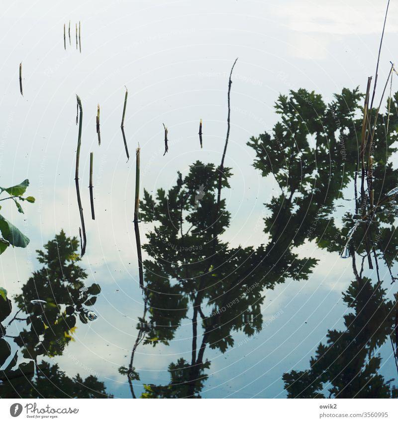 Kleine Buhnen Wasser Wasseroberfläche Reflexion & Spiegelung Zweige Wolken Himmel geheimnisvoll abstrakt Halme Menschenleer Außenaufnahme See Tag Farbfoto Natur