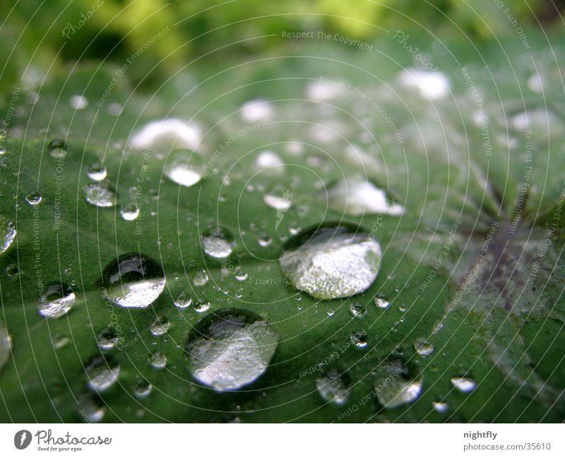 let it rain Blatt Pflanze grün Wassertropfen Regen Seil Natur Makroaufnahme