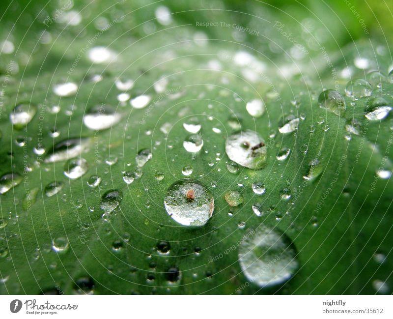 regentropfen Farbfoto Nahaufnahme Makroaufnahme Natur Pflanze Wasser Wassertropfen Blatt Flüssigkeit frisch nass natürlich grün rein Wachstum Regen Tropfen