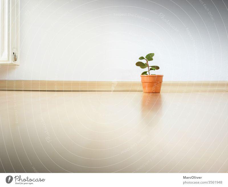 Minimalismus Wohnung - Nur eine kleine Pflanze in der Wohnung minimalistisch sehr wenige kleine Anlage leere Wohnung sparsam Genügsamkeit wenig besessen Konsum
