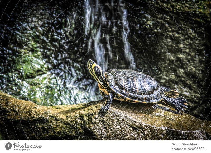Yoga ist für alle da... Natur grün Wasser Erholung ruhig Tier schwarz Wald gelb grau See Schönes Wetter Fitness Pause Fluss Wellness