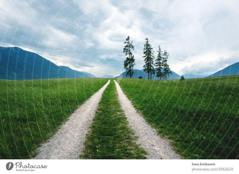 Schotterstraße durch stürmische Graslandschaft mit riesigen Kiefern in den österreichischen Alpen, Mieminger Plateau, Tirol, Österreich Landschaft grün Sommer