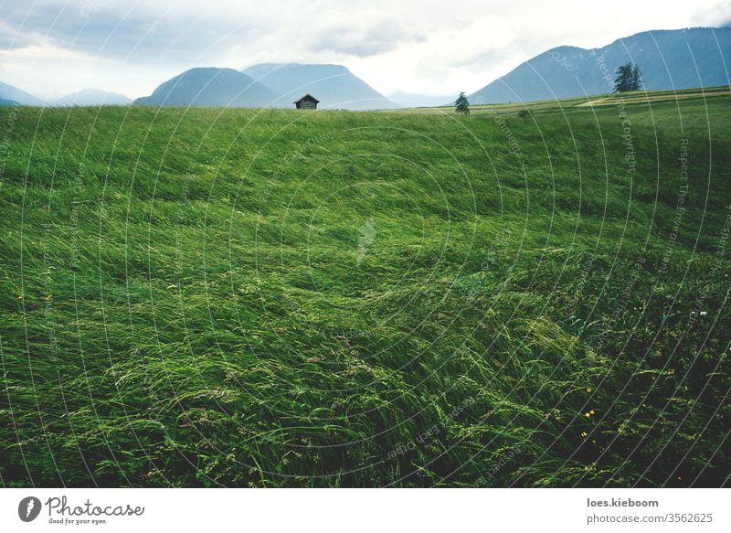 Verwehte Hochgraswiese in österreichischer Berglandschaft bei stürmischem Wetter, Mieminger Plateau, Tirol, Österreich Landschaft Alpen grün Sommer Unwetter