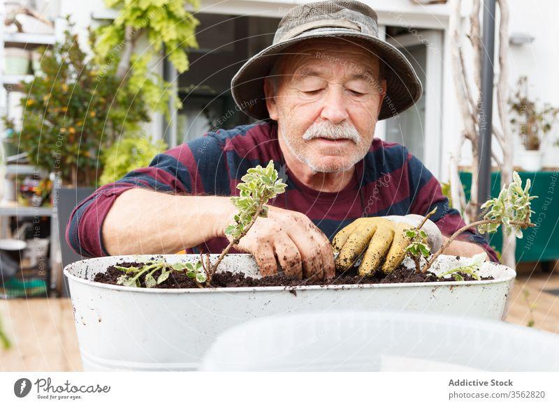 Älterer Mann arbeitet mit Pflanzen im Garten Senior Haus Rentnerin Topf Hof Hobby wachsen männlich lässig älter kultivieren Lifestyle Landschaft rustikal Pflege