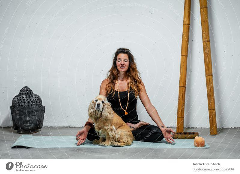 Gelassene Frau praktiziert Yoga in Lotus-Pose in der Nähe des Hundes meditieren üben padmasana Inhalt Konzentration Windstille Gelassenheit