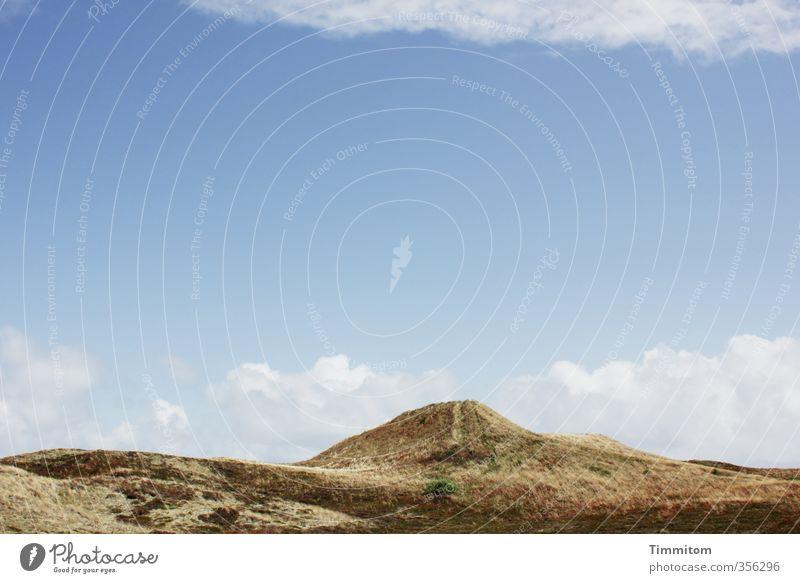Sonnentag. Ferien & Urlaub & Reisen Umwelt Natur Landschaft Pflanze Sand Himmel Wolken Schönes Wetter Dünengras Nordsee Dänemark Wege & Pfade groß blau Gefühle