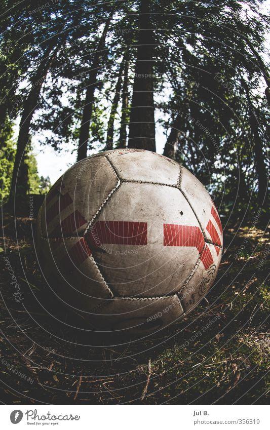 Forrestball Natur alt Freude Wald Umwelt Stimmung Luft Fußball gut Ball