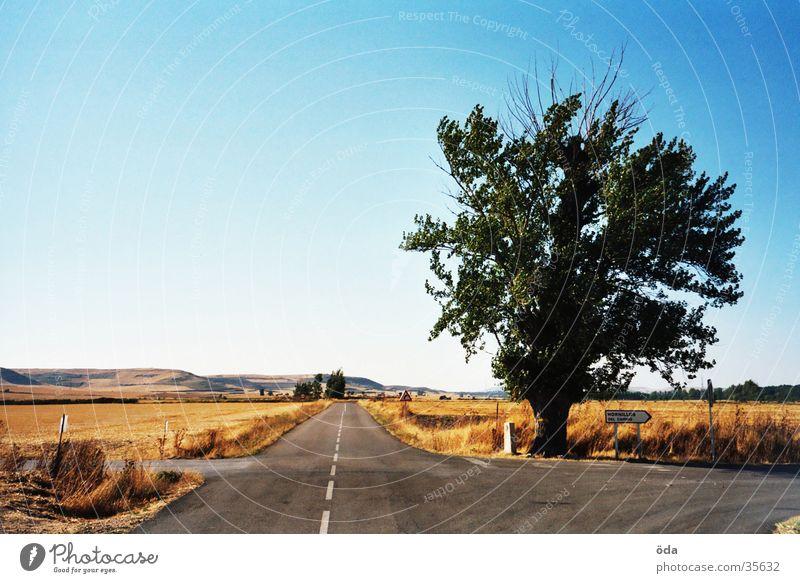 Baum in der spanischen Meseta Natur Straße Wege & Pfade Aussicht Richtung Spanien Ödland