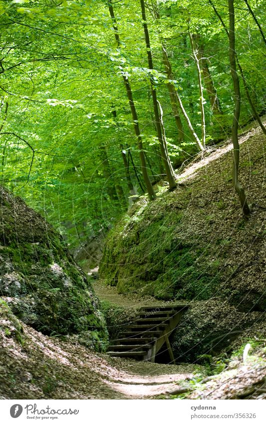 Treppe im Wald Gesundheit Leben harmonisch Erholung ruhig Ausflug Abenteuer wandern Umwelt Natur Landschaft Frühling Sommer Felsen einzigartig entdecken