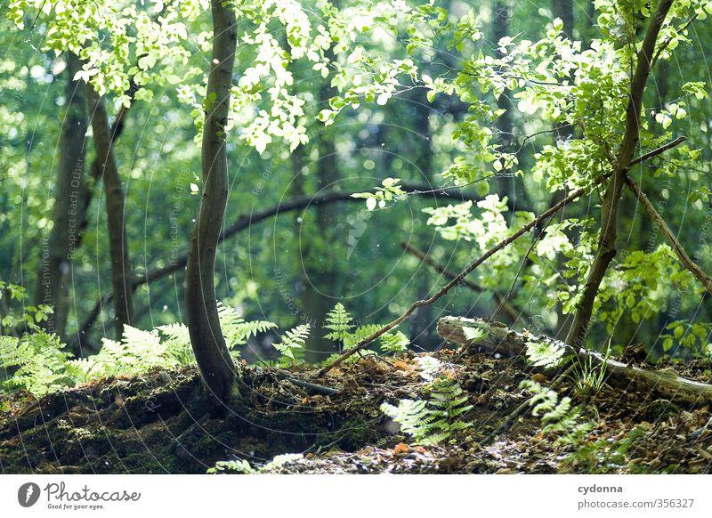 Im Licht Gesundheit Leben harmonisch Wohlgefühl Erholung ruhig Umwelt Natur Landschaft Sonnenlicht Frühling Sommer Schönes Wetter Baum Farn Wald einzigartig