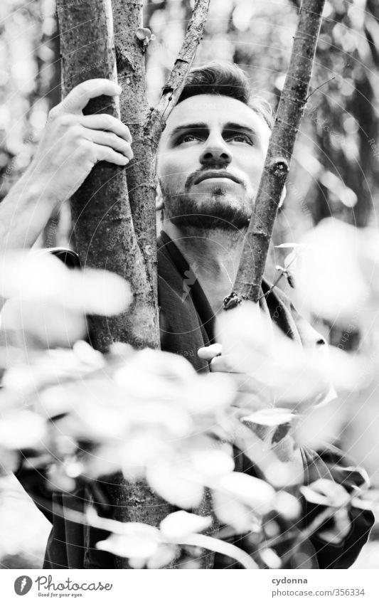 Waldmann V Mensch Natur Jugendliche schön Sommer Baum ruhig Junger Mann 18-30 Jahre Wald Umwelt Erwachsene Leben Freiheit elegant Idylle