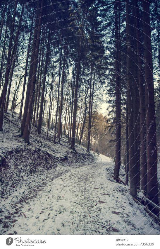 Der letzte Winter - Rückblick Umwelt Natur Landschaft Himmel Wetter Schönes Wetter Eis Frost Schnee Pflanze Baum Wald Wandel & Veränderung Nadelbaum Tanne