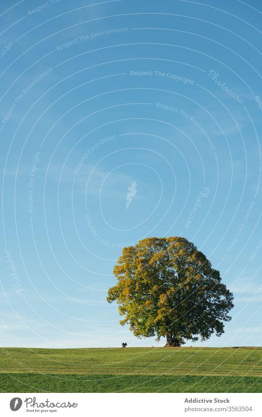 Blühender Baum auf der grünen Wiese in der Landschaft Feld hell Natur Blauer Himmel Blütezeit pulsierend einsam Umwelt Pflanze Sommer Frühling Wachstum Flora