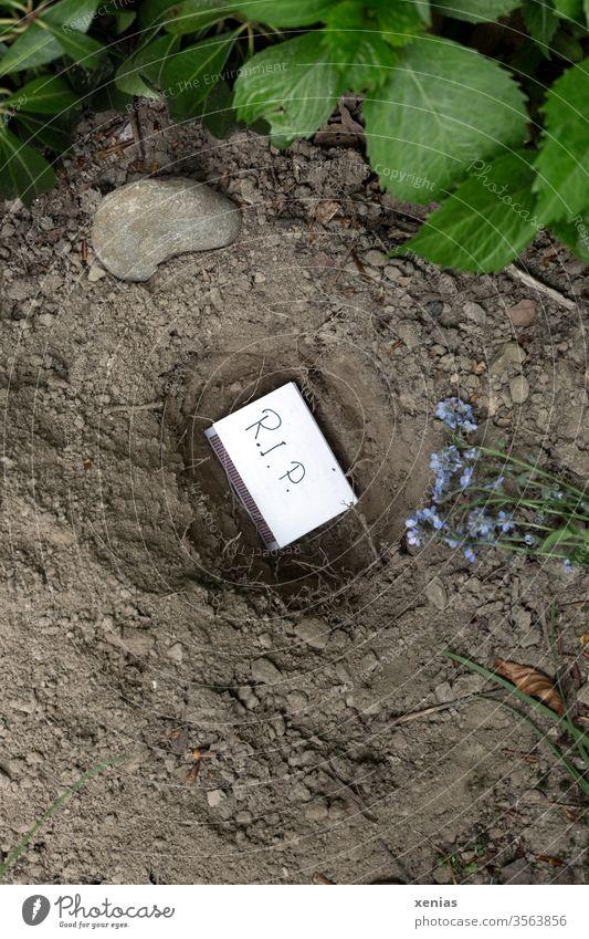 Streichholzschachtel mit Aufschrift R.I.P. liegt im Grab, ausgehoben in trockener Erde - hier ruht Günther ein Endler-Guppy RIP Abschiednahme Bestattung