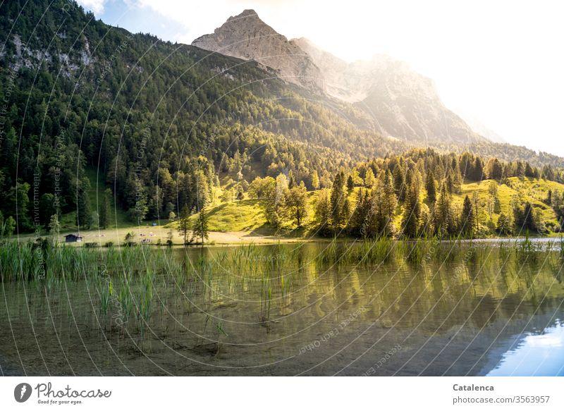 Blick vom Ferchensee auf den Wetterstein am frühen Morgen Berge Gebirge Berge u. Gebirge Alpen Wiese Wald Fichten Tannen Gras Gebirgssee See Wasser Himmel