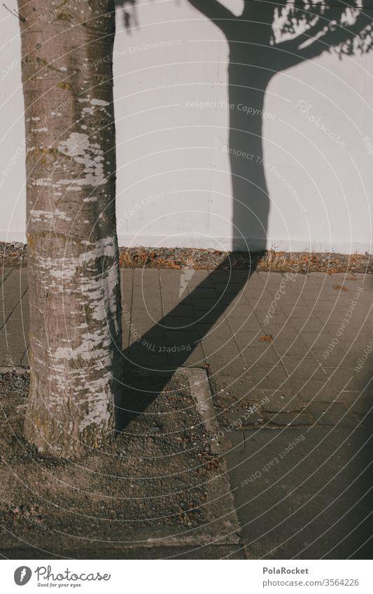 #As# Shadow Tree Schatten Schattenspiel Schattenseite Schattendasein schattenspender Baum abstrakt urban Außenaufnahme Farbfoto Licht