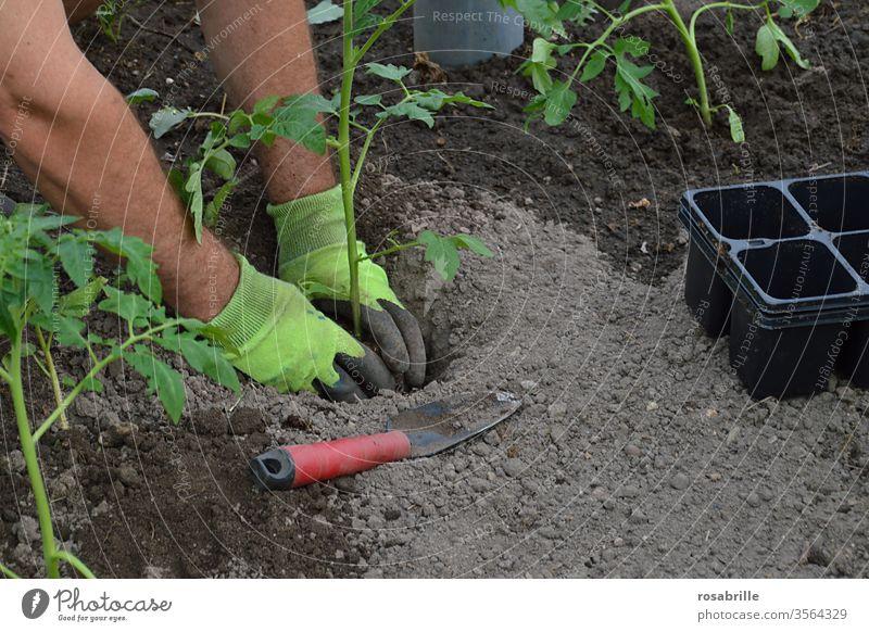 Vorfreude | auf die leckeren Tomaten beim Einpflanzen der Tomatenstöckchen in die Erde Garten einpflanzen Pflanze Tomatenstock gärtnern anbauen Frühling