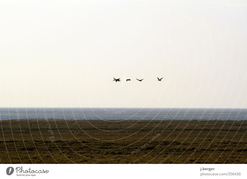 Abflug Ferien & Urlaub & Reisen Ferne Freiheit Sommerurlaub Natur Landschaft Pflanze Tier Urelemente Erde Wasser Himmel Wolkenloser Himmel Horizont Herbst Küste