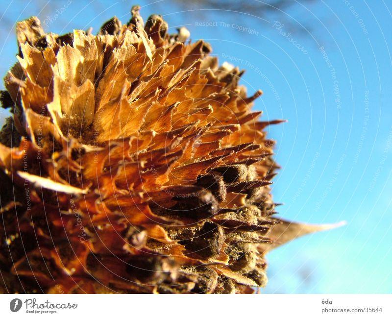 vergangen Blume dünn Sonnenblume verblüht welk