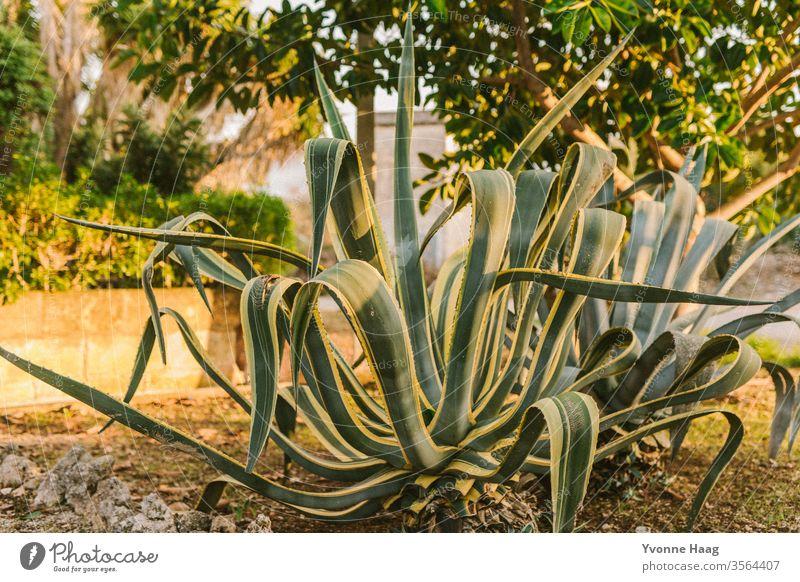 Aloe Vera Himmel Küste Wolken Farbfoto Natur Wind Außenaufnahme Landschaft Wasser schlechtes Wetter Klima Umwelt Urelemente Tag Luft Regen Klimawandel Insel