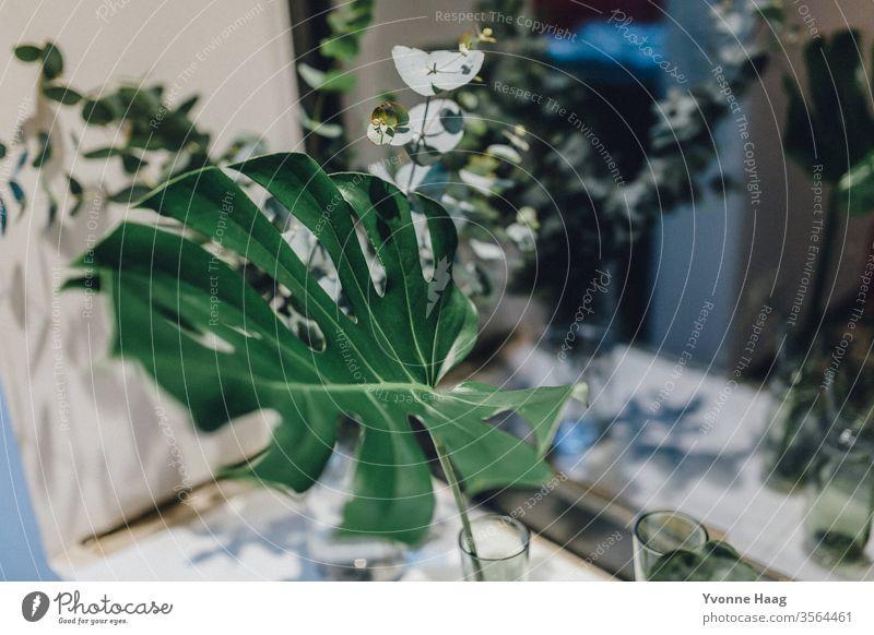 Monsterra Blatt farbenfroh Liebe Geburtstag Muttertag Geschenk Teppich orientalisch Blumenmuster Blumentopf Blumenstrauß Frühling Valentinstag Blüte Natur rosa