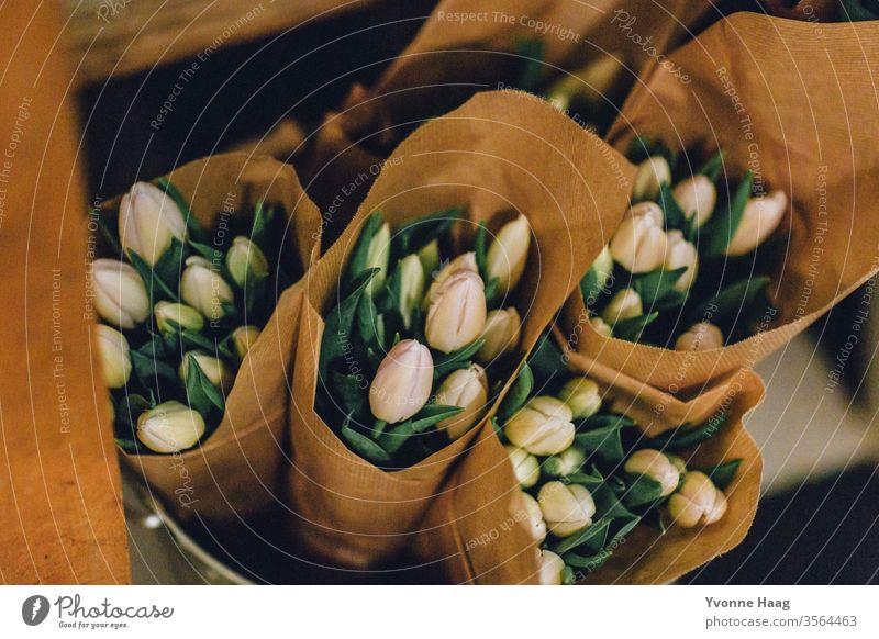 Gebundene Tulpen eingerollt in Papier Blumenstrauß Tulpenblüte Frühling Blüte Pflanze Farbfoto grün Blühend Innenaufnahme Hände haltend Blatt Schatten