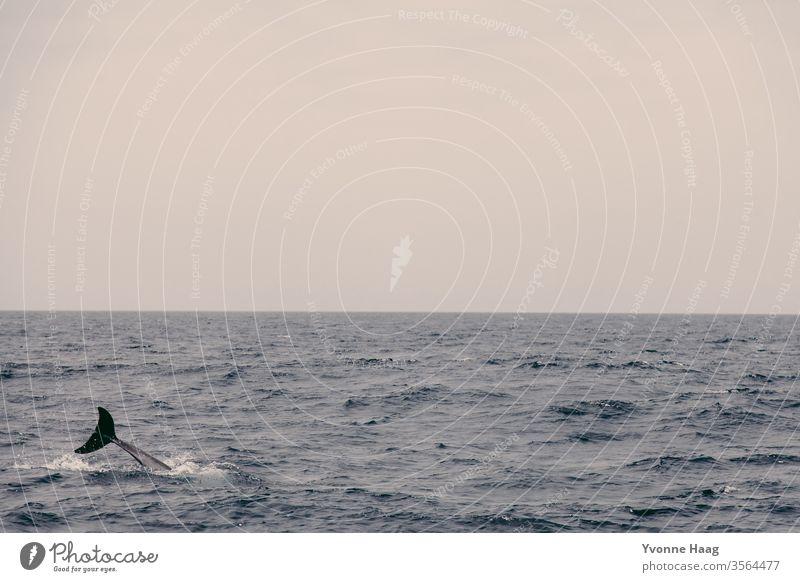 Delphinflosse im Meer Wasser Wellen Himmel blau Wolken Horizont Natur Ferne Menschenleer Landschaft weiß Schönes Wetter Sommer Tag Sonnenlicht
