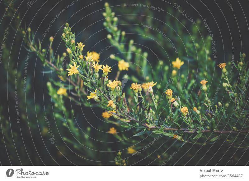 Detail von dünnen Zweigen mit kleinen gelben Blüten Ast Pflanze Blume Blütezeit Garten grün Flora frisch Botanik Wachstum hell organisch zerbrechlich natürlich