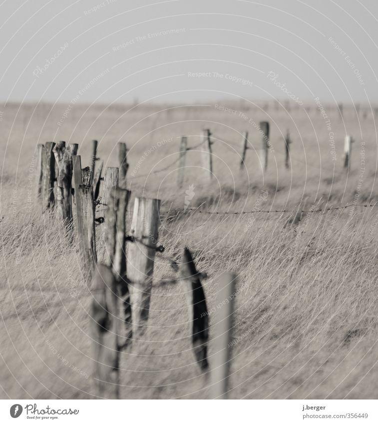 III iI IIIi I Ferne Strand Natur Landschaft Pflanze Wolkenloser Himmel Herbst Gras Sträucher Wiese Küste Nordsee braun grau Wattenmeer Feuchtwiese Zaun