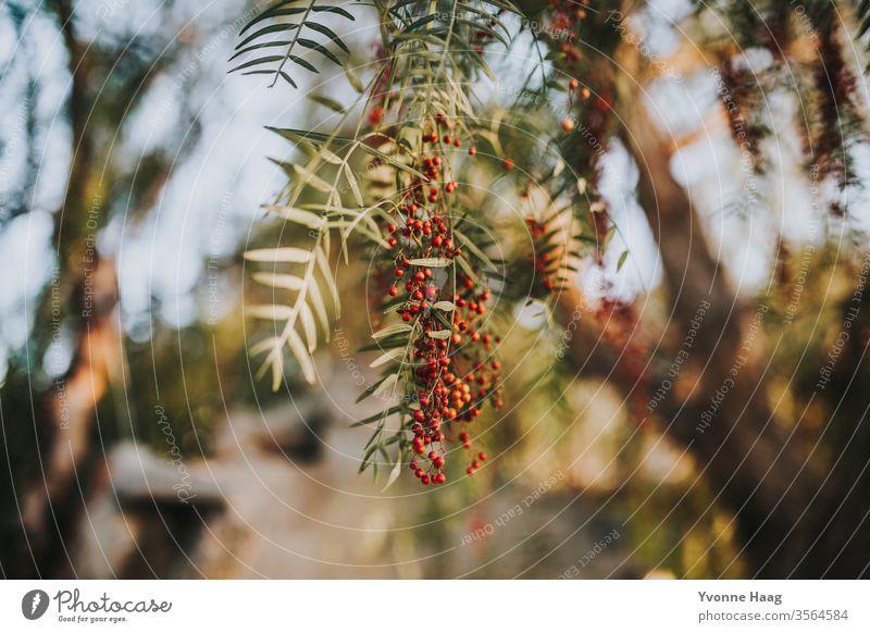 Pfefferkörner rot Tag Natur Außenaufnahme Wasser langsam exotisch grün wild Menschenleer natürlich Sommer braun Umwelt niedlich klein Fluss Süden Sonnenlicht