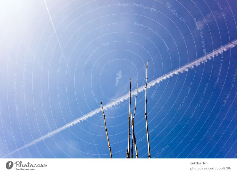 Kondensstreifen mit Bambus kondensstreifen chemtrail froschperspektive himmel hintergrund klima klimawandel aluhut menschenleer meteorologie chemical trail
