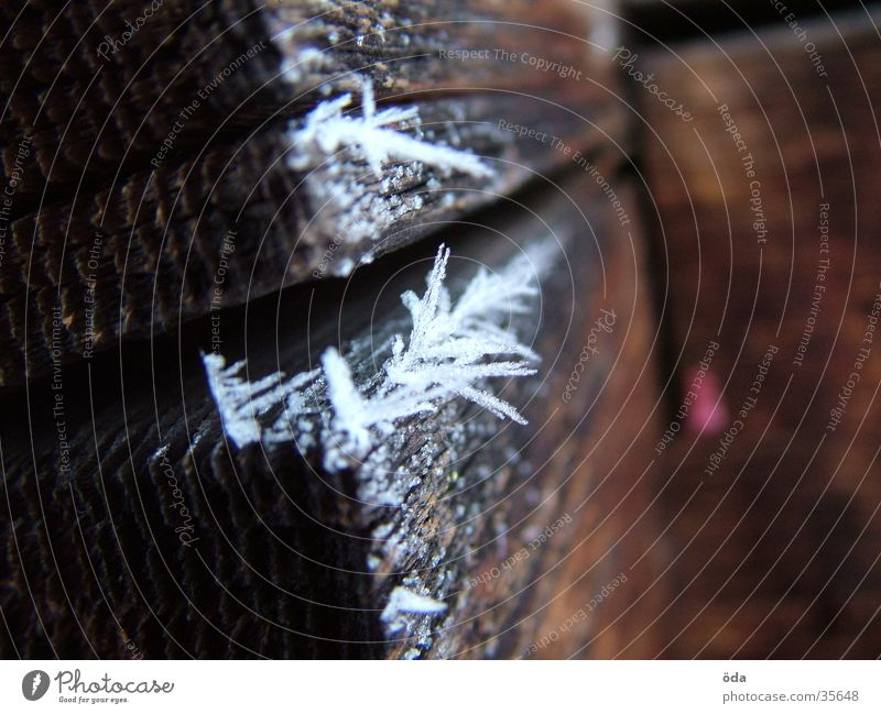 Reif - Schneeblume Winter kalt Holz Makroaufnahme Nahaufnahme Raureif Balken Kristallstrukturen