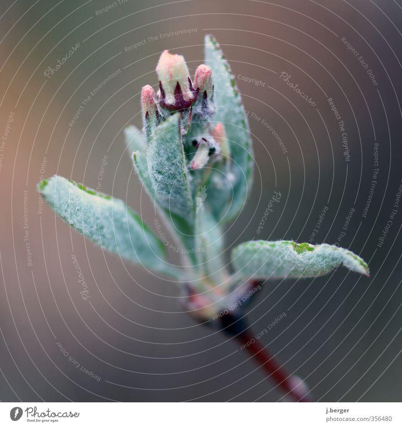 Grünzeug Umwelt Natur Pflanze Frühling Blatt Blüte Grünpflanze Wildpflanze Wachstum mehrfarbig grün rosa Farbfoto Gedeckte Farben Außenaufnahme Nahaufnahme
