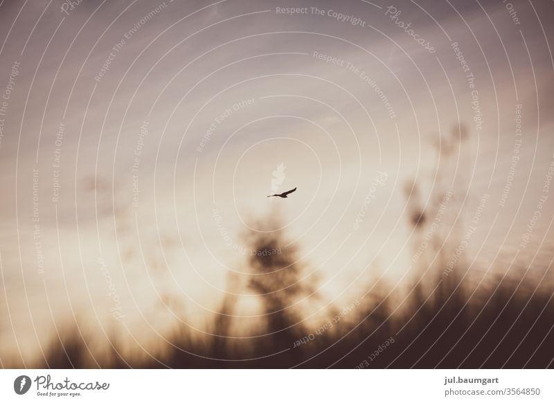 Freiheit Natur Die Welt Himmel Am Morgen Vogel Wie die Luft den Vogel trägt