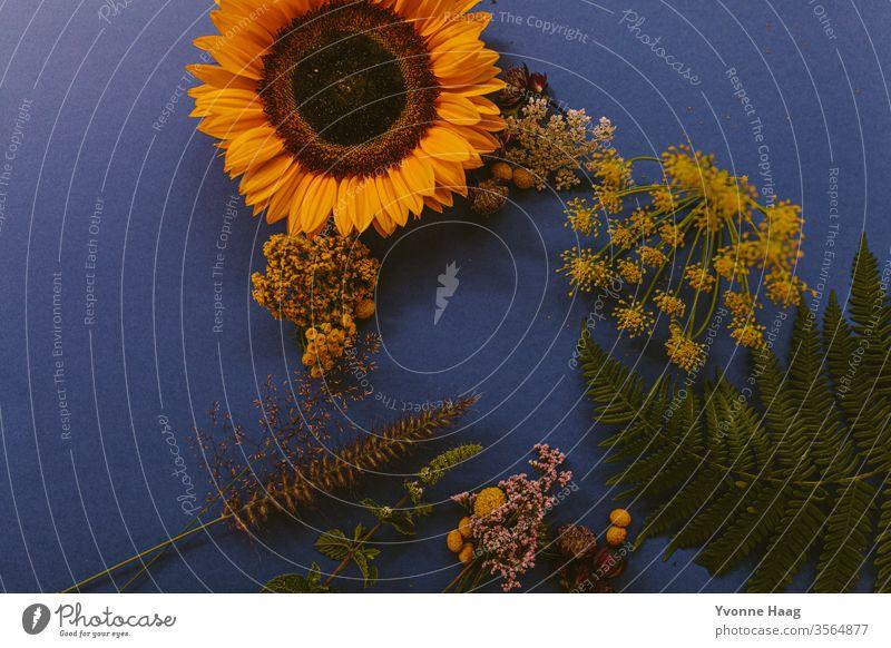 Blumenarrangement mit wilden Blumen auf einem blauen Hintergrund Blumenstrauß Pflanze Blüte Frühling Blatt Blühend Farbfoto Innenaufnahme mock up mockup mock-up