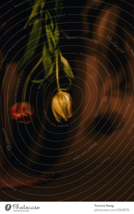 Fallende Tulpen Blumenstrauß Tulpenblüte Frühling Blüte Pflanze Farbfoto grün Blühend Innenaufnahme Hände haltend Blatt Schatten Schattenspiel