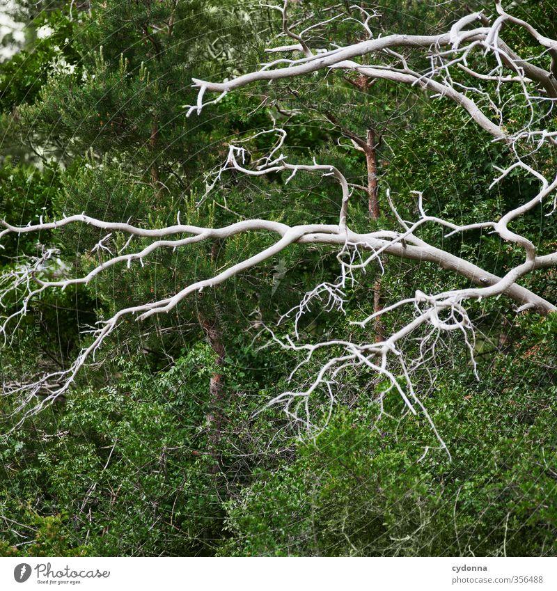 Verästelungen harmonisch Umwelt Natur Sommer Baum Wald ästhetisch Partnerschaft einzigartig Ende Farbe Freiheit Leben Misserfolg nachhaltig skurril Tod