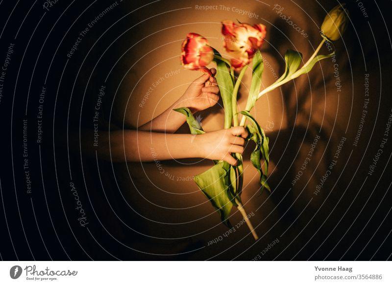 Tulpen in der Hand Blumenstrauß Tulpenblüte Frühling Blüte Pflanze Farbfoto grün Blühend Innenaufnahme Hände haltend Blatt Schatten Schattenspiel