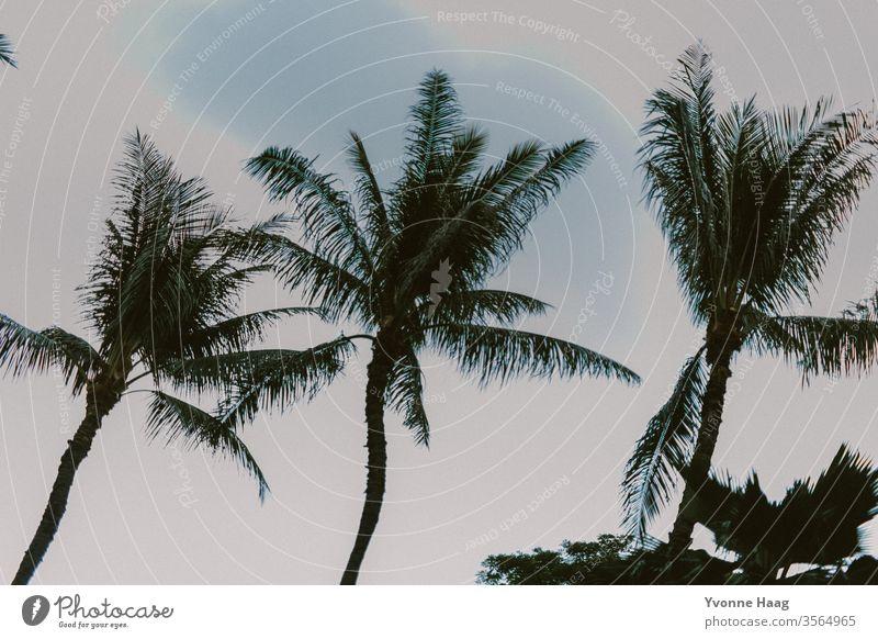blaue Palmen Palmenwedel Palmenstrand Ferien & Urlaub & Reisen Natur Menschenleer Farbfoto Umwelt Sommer Sommerurlaub Baum Tourismus Sonnenlicht Strand