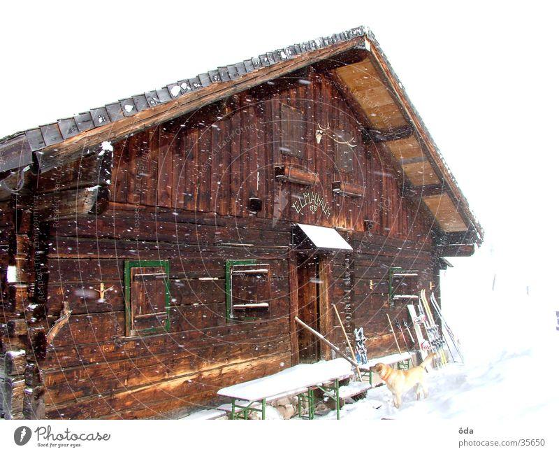 verschneite Elmau Alm Winter Schnee Fenster Hund abgelegen Einsamkeit Architektur Hütte