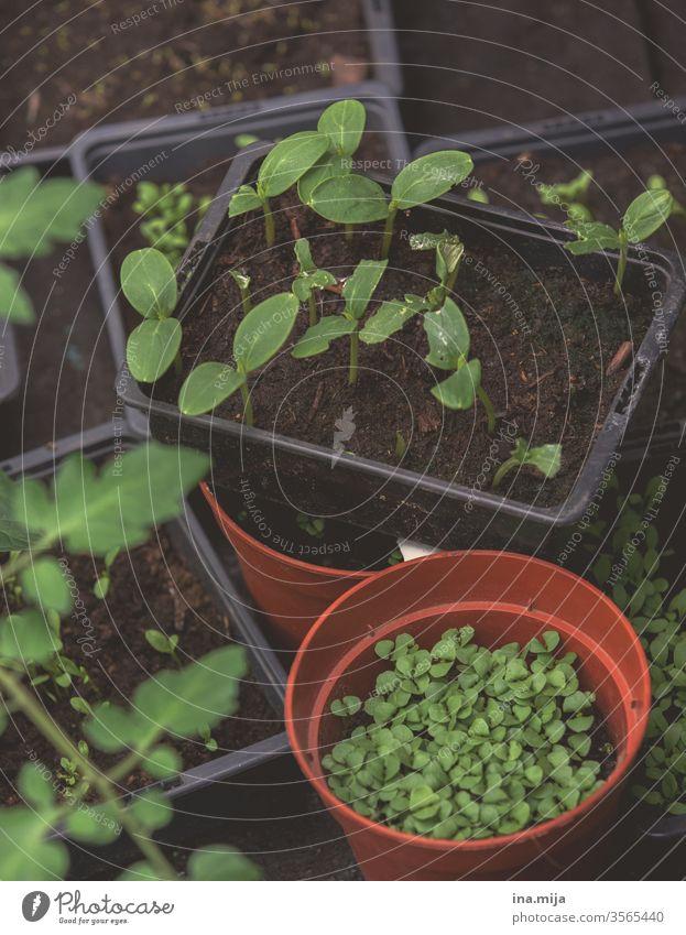 Neues Hobby vegetarisch vegan Vegane Ernährung Küche Essen zubereiten Natur Garten natürlich hausgemacht botanisch Gartenarbeit wachsend Wachstum organisch