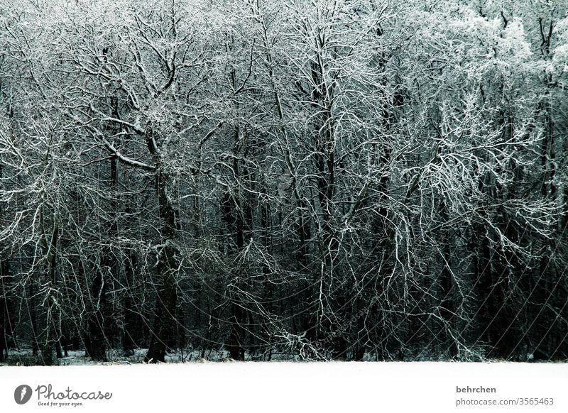verzweigt Zweige u. Äste ruhig Winterwald Winterstimmung Märchenhaft Wintertag Winterspaziergang geheimnisvoll Märchenwald Nebel Menschenleer Raureif
