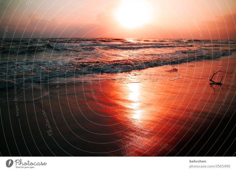 SONN(En)tag Gegenlicht Sonnenuntergang Sonnenaufgang Sonnenstrahlen Sonnenlicht Dämmerung Morgendämmerung Menschenleer Außenaufnahme Farbfoto Fernweh Sehnsucht