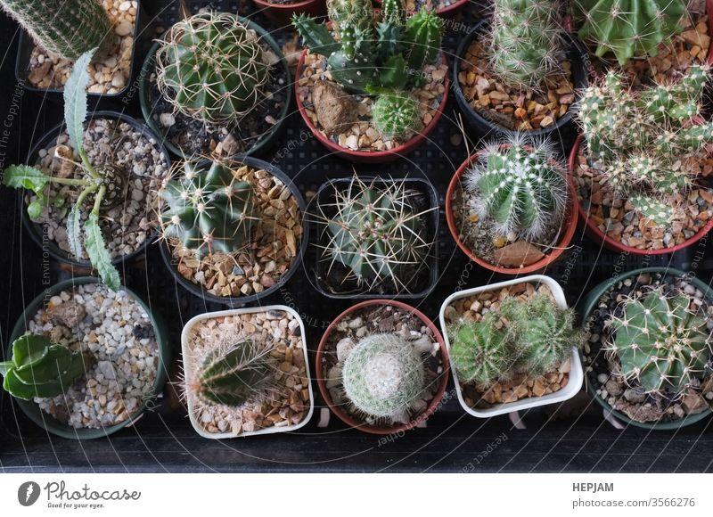 Draufsicht , Sammlung verschiedener Kakteen und Sukkulenten in verschiedenen Töpfen. Platz für Ihren Text Hintergrund schön Überstrahlung botanisch Botanik