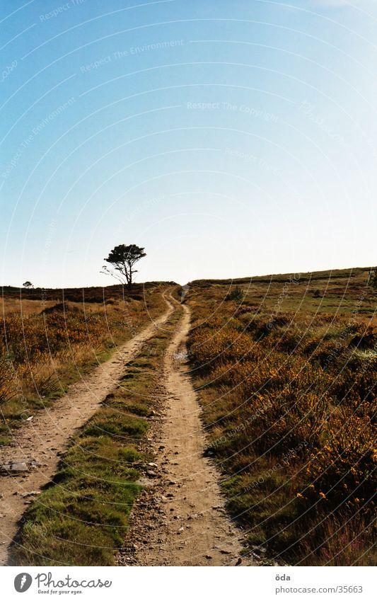 wohin nur? Baum Ferne Straße Wege & Pfade Landschaft Unendlichkeit Blauer Himmel