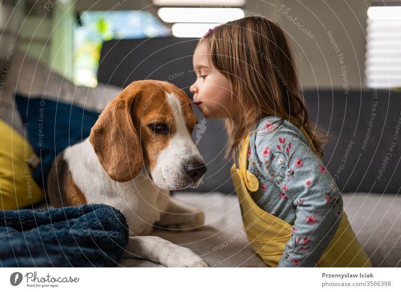 Hund mit einem niedlichen kaukasischen Mädchen. Beagle liegt auf dem Sofa, Baby kommt und gibt Hunden einen Kuss auf die Stirn. Liebe Kaukasier wenig im Inneren