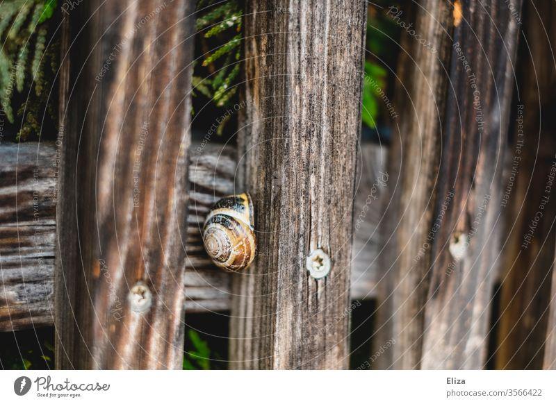 Eine Schnecke in ihrem Schneckenhaus an einem Holzzaun Zaun draußen Natur rund versteckt Nahaufnahme Spirale braun verstecken Haus Sicherheit Schutz Tier